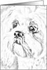 Pet Loss Sympathy - Lhasa Apso card