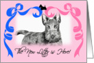 New Litter Announcement - Scottish Terrier card