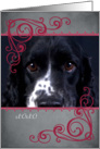 Don't make me beg ... featuring an Springer/Cocker Mix card