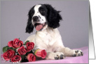 All Occasion Greeting Card - featuring an English Springer Spaniel Puppy card