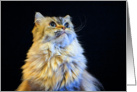 All Occasion Greeting Card - featuring a Himalayan Cat in Digital Oil Painting card