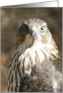 All Occasion Greeting Card - featuring a Peregrine Hawk in digital artwork card