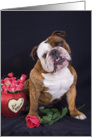I love you - featuring an English Bulldog with roses card