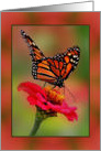 Blank Inside Collage Style, with Photograph of Monarch Butterfly card