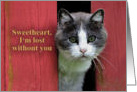 Sweetheart, Missing You, Cute Cat card