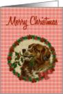 Saint Bernard Christmas Dog, Holly Wreath with Poinsettias card