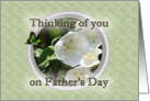 Father's Day, thinking of you, loss of child, white rose card