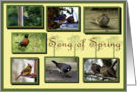 Songbird Collage collection of seven song birds card