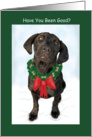 Christmas - Funny Black Dog Molly Sue Who card