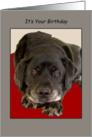 Black Labrador Dog Looks Up Birthday card