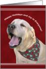 Yellow Labrador Dog Calls Holiday Wishes Christmas card