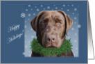 Chocolate Labrador with Wreath Christmas Holidays card