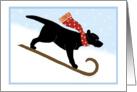 Christmas Black Lab Sled Dog Winter Holiday card