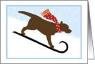 Christmas Chocolate Lab Sled Dog Winter Holiday card