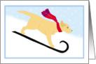 Christmas Yellow Lab Sled Dog Winter Holiday card