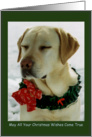 Christmas Wishes Yellow Labrador dog with wreath collar card