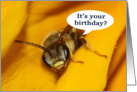 It's Your Birthday humorous sleepy bee card