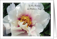 Happy Mother's Day to Estranged Mother, White and Pink Peony card