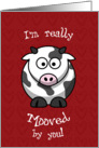 Valentine's Day Cow Moo Humorous card