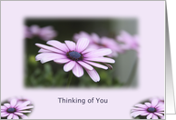 Estranged Daughter, Thinking of You, From Mother, Purple Flower card