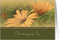 Estranged Daughter, Thinking of You, Orange Flower card