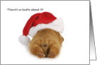 Funny Puppy with Santa Hat card