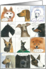 Happy Birthday-Dogs card