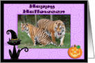 Halloween Tigers card