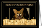 Halloween African Serval Cat card
