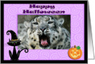 Halloween Snow Leopard card