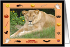 Halloween Barbary Lion card