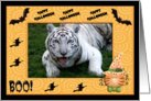 Halloween White Tiger card