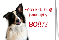 Dog Years, Birthday 80 Years Old card