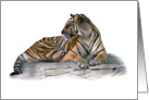 Reclining tiger card