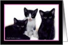Three Kitties Halloween, Pink Border card