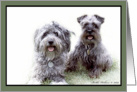 Schnauzer and Cockapoo card