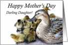 Mother's Day, Mother Duck and Ducklings, Darling card