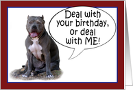 Pit Bull, Deal with it! Happy Birthday card