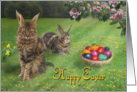Easter-Cat-Bunnies card