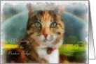Sympathy Pet cat - Tabby card