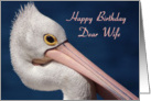 Birthday, Wife - Australian Pelican card