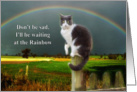 Sympathy, Loss of Pet, Black & White Cat - Rainbow card
