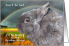 Sympathy Loss Of Pet - Rabbit card