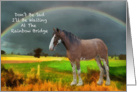 Sympathy Loss Of Pet - Horse card