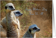 From Us All, Mother's Day - Meerkats card