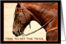 Hit the Trail Horse Card