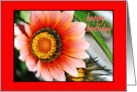 Happy Birthday Gazania card