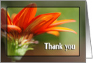 Thank You Gazania Blossom card