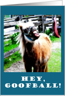 Hey Goofball! Horse Humorous Joke card