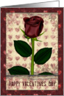 Happy Valentines Day single rose card